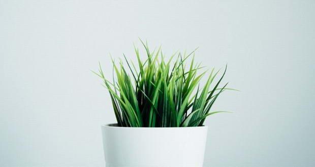 اثر داروی بیهوشی بر روی گیاهان